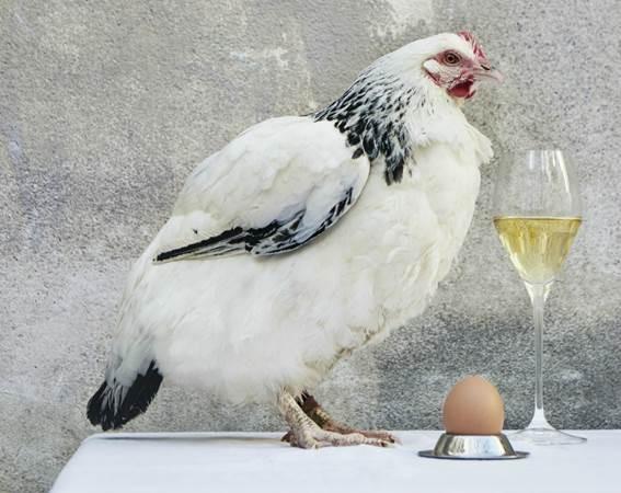 Champagnes Krug – événement gastronomique