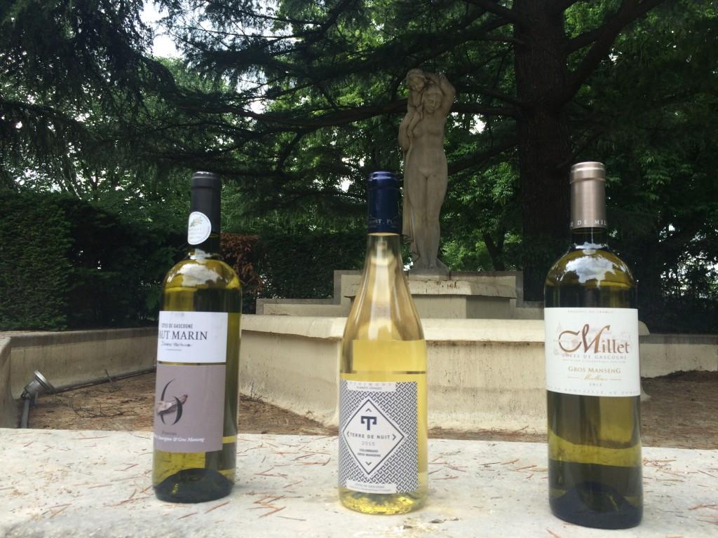 vins blancs - sélection oenologie - côte de gascogne