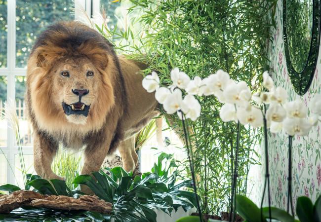 Le Trianon Palace Versailles – la Maison Deyrolle – exposition 6/12 au 5/1