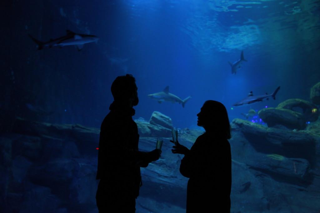 les nocturnes de l'aquarium de paris