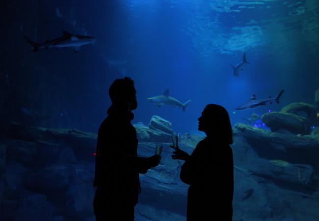 Les nocturnes de l'Aquarium de Paris – sortie insolite