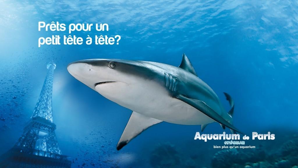 aquarium de paris - requin
