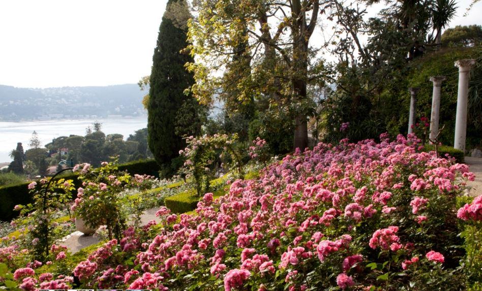 villa Ephrussi de Rotschild - roseraie