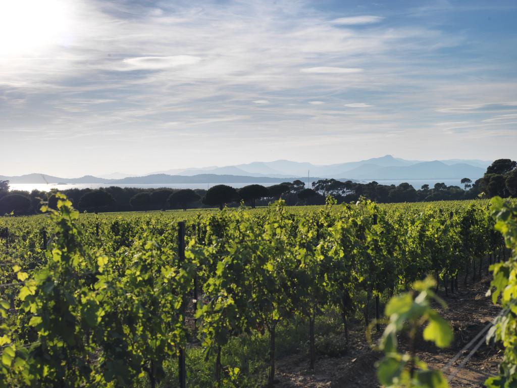 Courtade - vin de Provence - Porquerolles