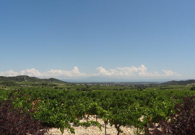 Couleur Tavel – fête du vin, de la gastronomie et du patrimoine de Tavel