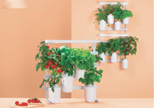 Nature & Découvertes – idées cadeaux de Noël – jardins d'intérieur et succulentes