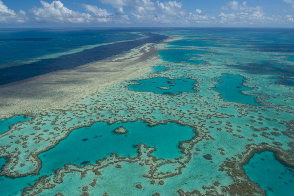 Australia now - une exposition sur la Grande Barrière de Corail à l'Aquarium de Paris