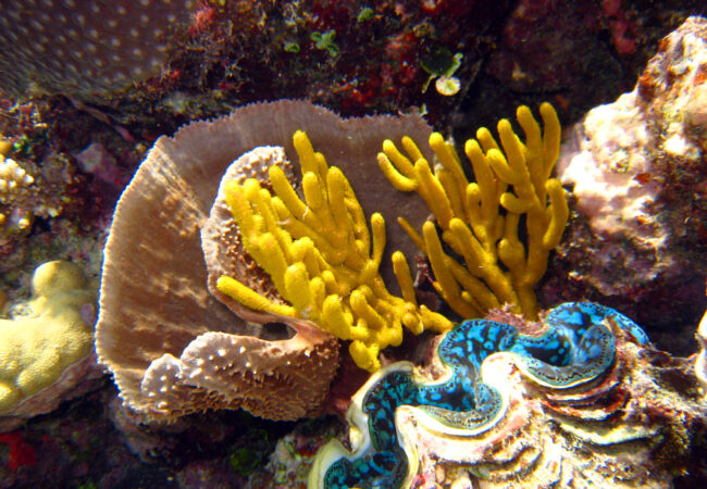 Australia now – une exposition sur la Grande Barrière de Corail à l'Aquarium de Paris